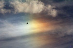 bird-sun-dog-rayego